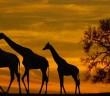 Musica africana relajante