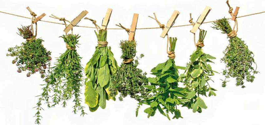 plantas medicinales para los nervios alterados